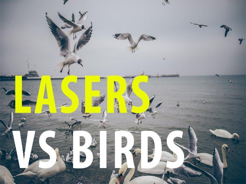 LASERS FIGHT BIRDS